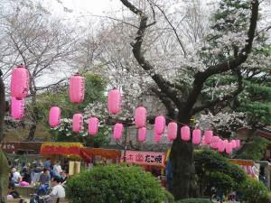 新井薬師公園(3/29)